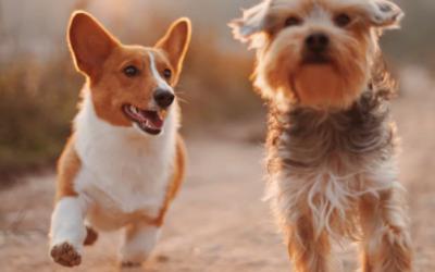 De aanschaf van een tweede hond
