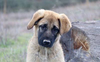 Buitenlandse hond adopteren//ophalen van het vliegveld