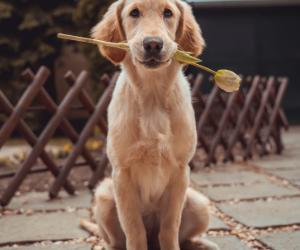 6 cruciale dingen waar je op moet letten als je een hond gaat aanschaffen