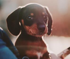 8 aandachtspunten bij het opvoeden van je pup
