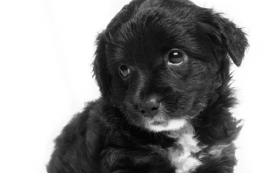 9 meest gemaakte fouten bij de opvoeding van een pup