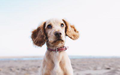 Welke taal spreek jij tegen je hond?
